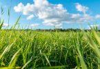 Temps de pousse gazon : facteurs clés et conseils d'optimisation