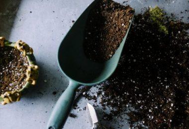 Que planter en août? Zoom sur quelques plants favorables